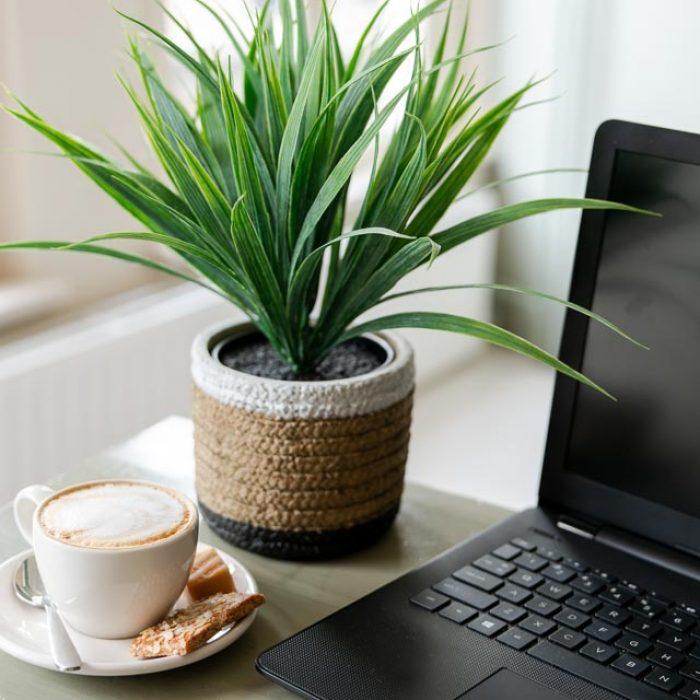 Li-Z, webdesign, social media, fotografie